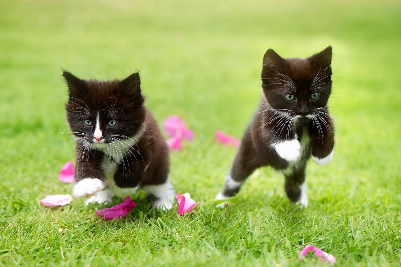 Фото Котята Кошки Двое Черный Прыжок Трава Животные