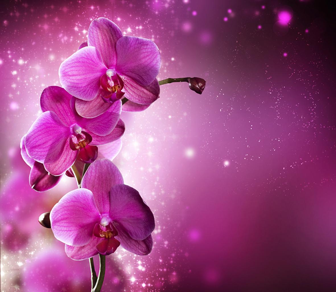 Картинка розовые орхидея цветок Крупным планом розовых Розовый розовая Орхидеи Цветы вблизи