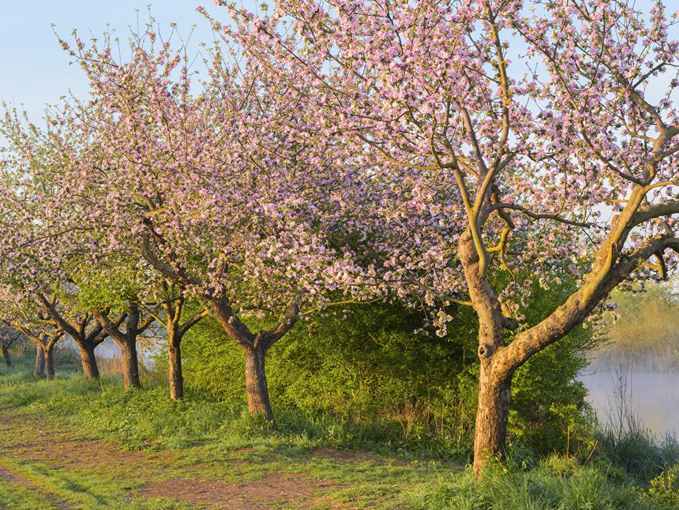 Фотографии Весна Природа траве Цветущие деревья весенние Трава