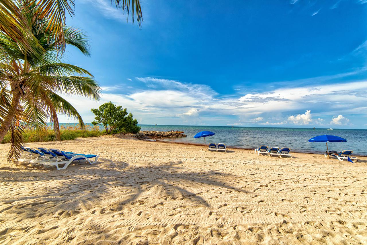 Картинка Флорида США Smathers Beach пляжи Природа пальма зонтом Шезлонг штаты америка Пляж пляжа пляже пальм Пальмы Зонт Лежаки зонтик