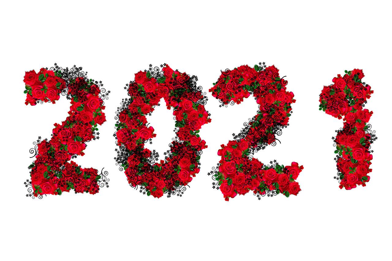 Картинка 2021 Рождество роза Белый фон Новый год Розы белом фоне белым фоном