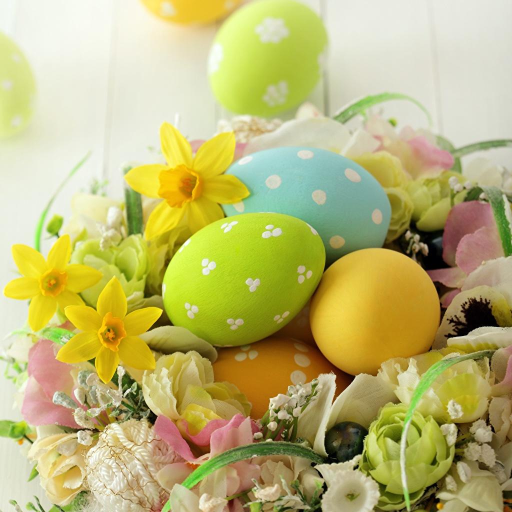 Картинка Пасха Яйца Цветы Нарциссы яиц яйцо яйцами цветок