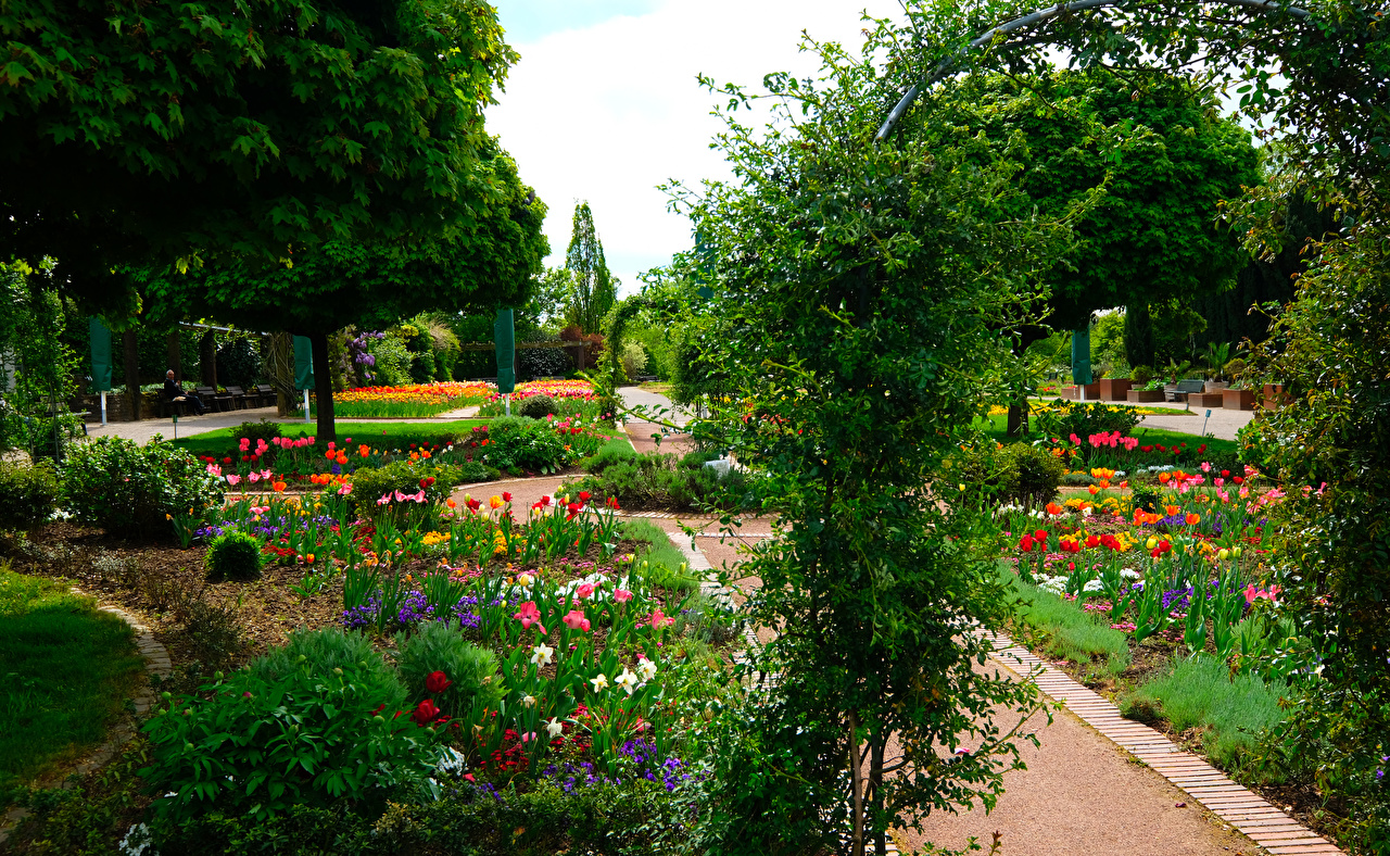 Фотографии Германия Botanischer Garten Solingen Природа Тюльпаны Парки Кусты