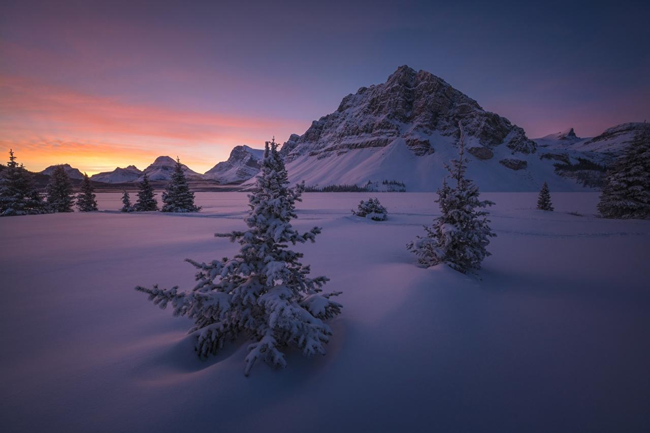 Обои Банф Канада Ель Зима скале Природа Парки снеге Рассветы и закаты ели Утес скалы Скала зимние Снег снегу снега