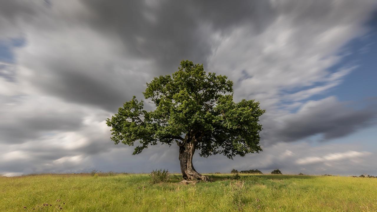 Фотография Англия Hertfordshire Природа Трава Облака Деревья траве дерево дерева облако облачно деревьев