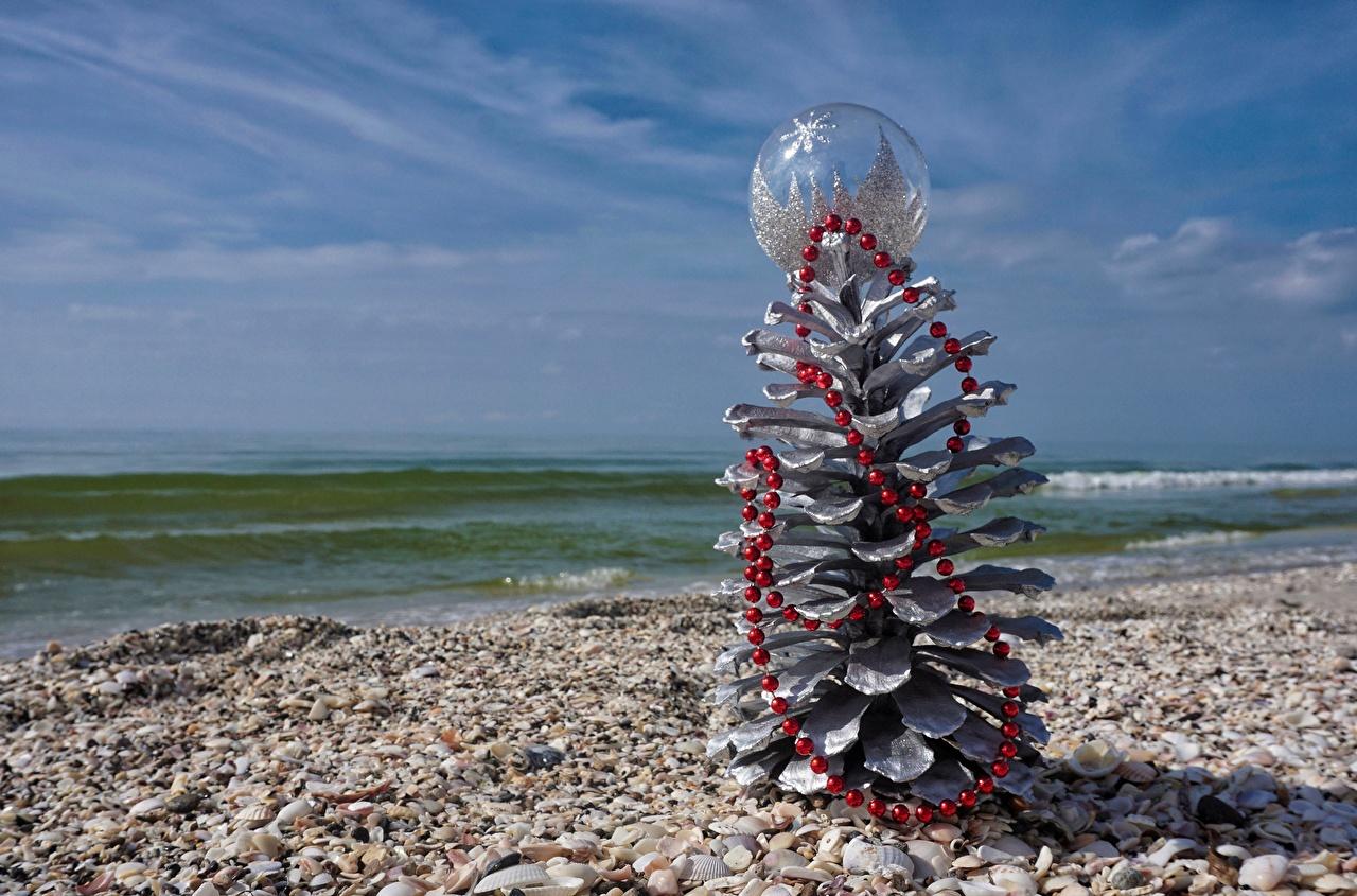 Картинки Рождество Море Природа Ракушки Шишки Новый год шишка