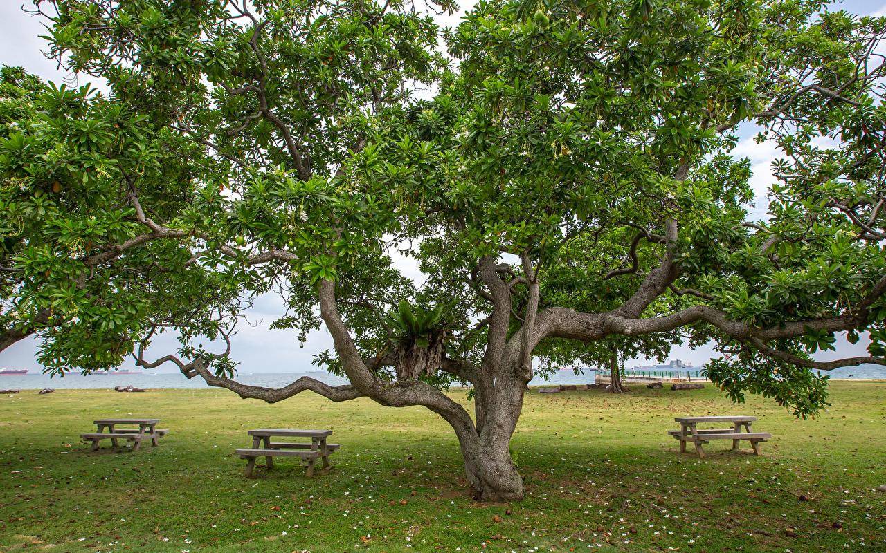 Обои для рабочего стола Сингапур East Coast Park Природа Парки Скамья Деревья парк Скамейка дерево дерева деревьев
