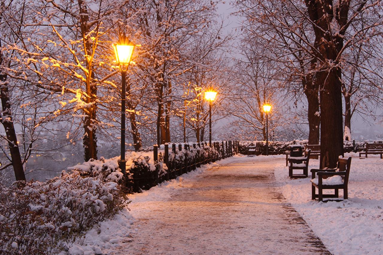 Фотография Чехия Brno зимние Природа парк снега Вечер Скамейка Уличные фонари деревьев Зима Снег снеге снегу Парки Скамья дерево дерева Деревья
