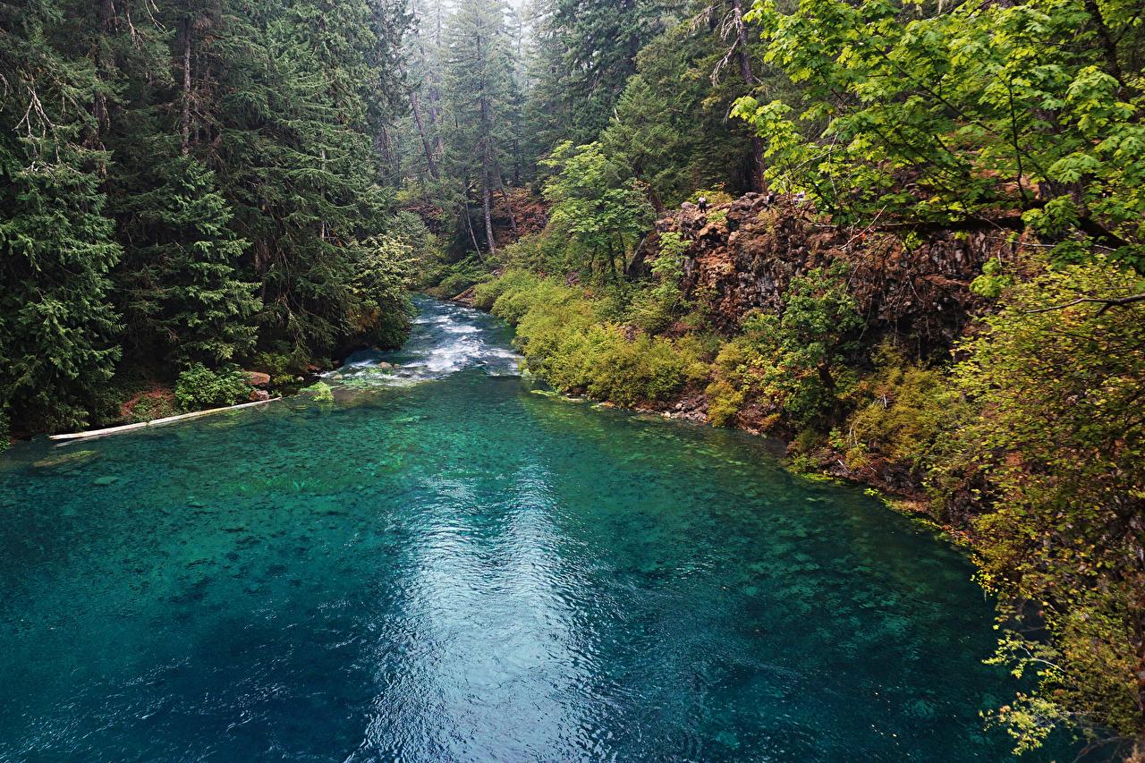 Картинка штаты McKenzie River Oregon ели Природа лес речка США америка Ель Леса Реки река