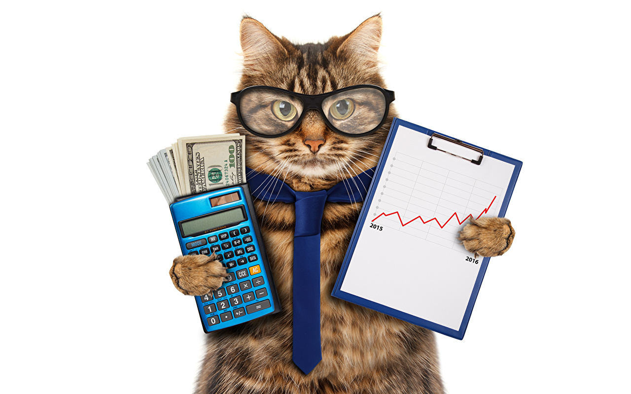 картинки для рабочего стола кошки прикольные