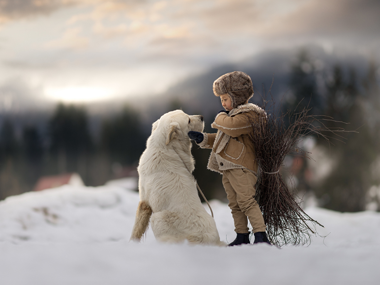 Фотография Собаки мальчишки боке ребёнок снега Животные собака мальчик Мальчики мальчишка Размытый фон Дети Снег снегу снеге животное