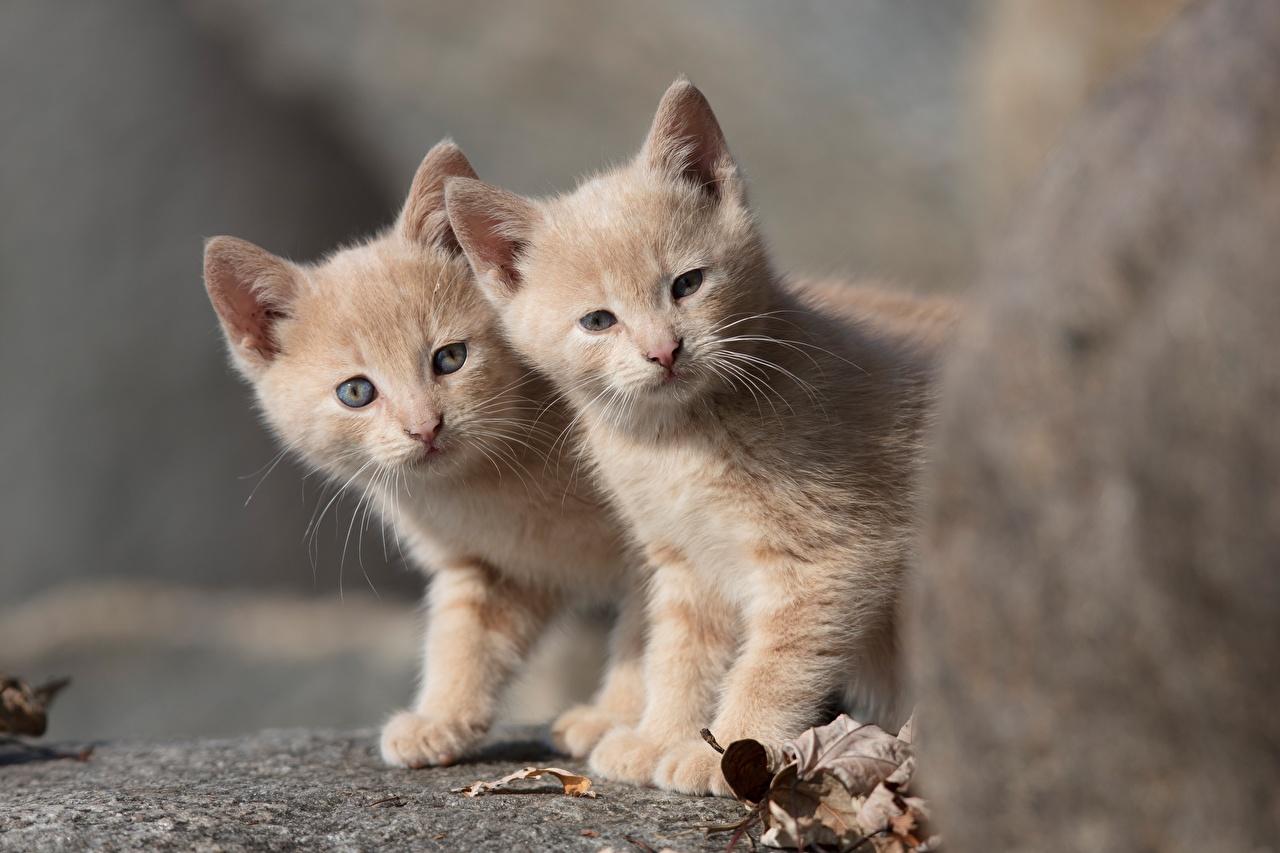 Фото котят Кошки два Животные Котята котенок котенка кот коты кошка 2 две Двое вдвоем животное