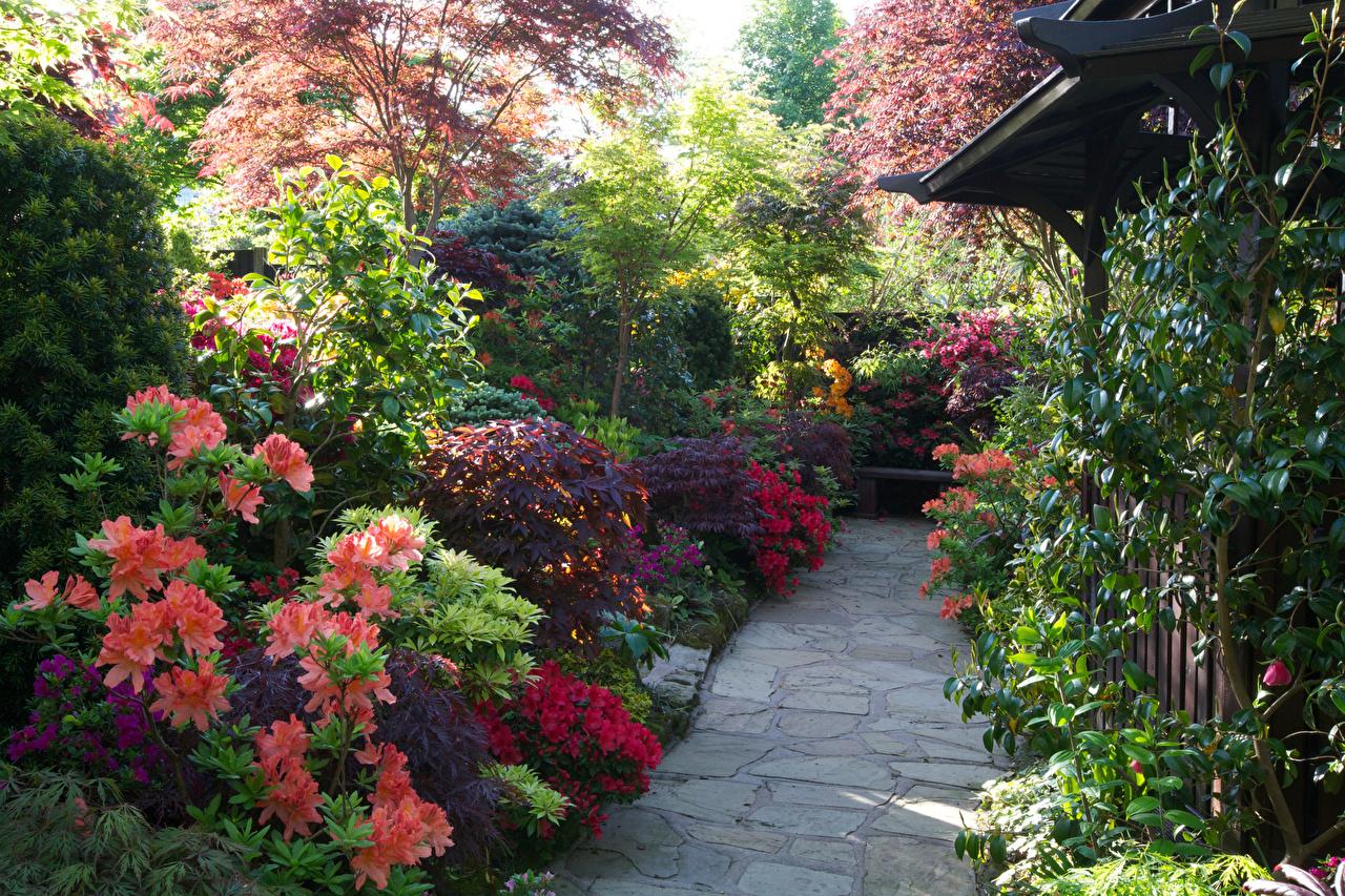 Картинка Англия Walsall Garden Природа Сады Рододендрон кустов Кусты