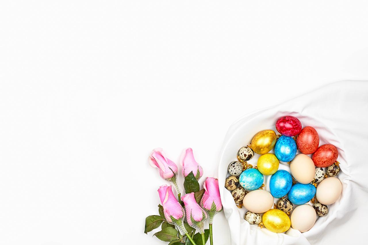 Картинка Пасха Разноцветные яйцами роза розовая Цветы Продукты питания Шаблон поздравительной открытки Белый фон яиц яйцо Яйца Розы Розовый розовые розовых цветок Еда Пища белом фоне белым фоном