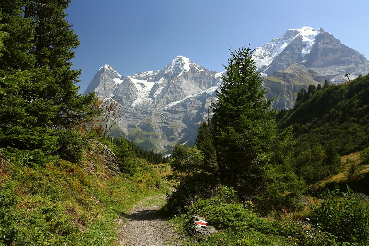 Обои Швейцария Jungfrau Region Ель Горы Природа тропинка Трава Тропа