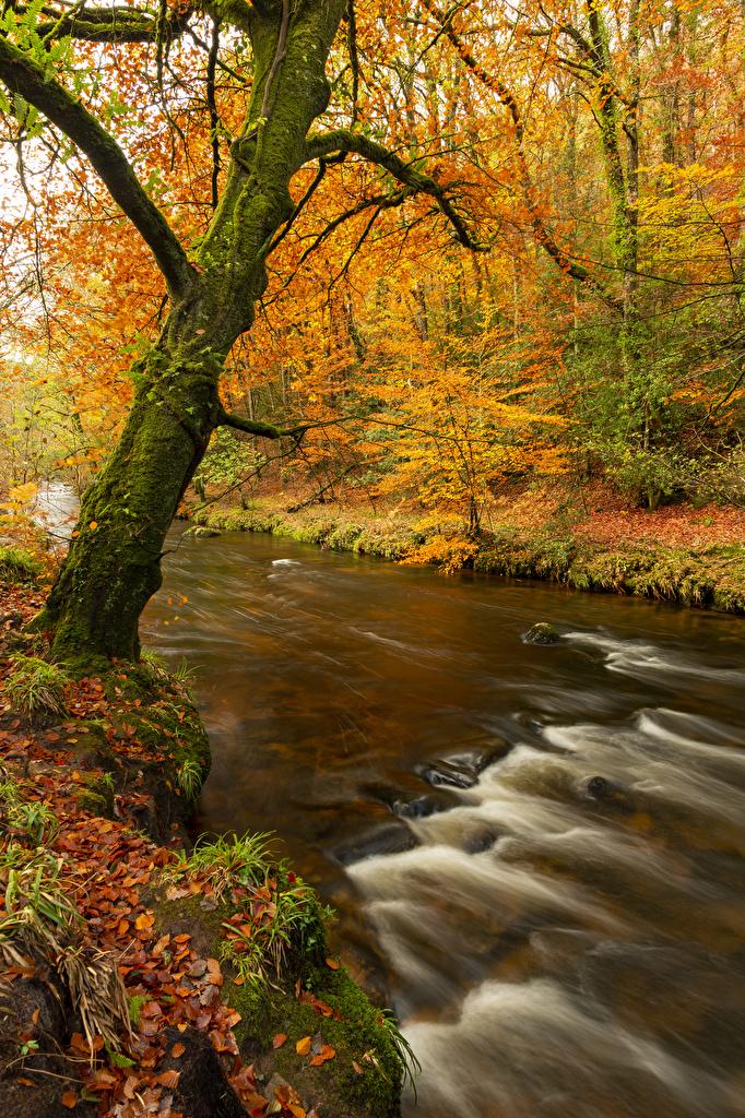 Фото лист Осень Природа Реки Деревья  для мобильного телефона Листва Листья осенние река речка дерево дерева деревьев