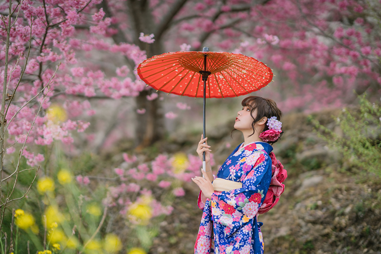 Картинка Размытый фон Кимоно девушка азиатки зонтом Цветущие деревья боке Девушки молодая женщина молодые женщины Азиаты азиатка Зонт зонтик