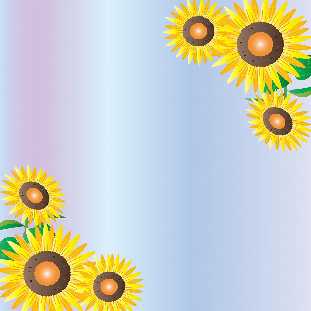 Картинки Подсолнухи Шаблон поздравительной открытки Подсолнечник