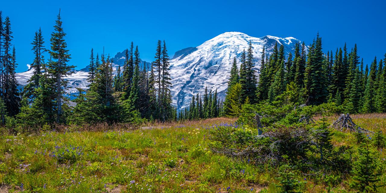 Фото штаты панорамная Mount Rainier National Park гора Природа Парки Пейзаж деревьев США америка Панорама Горы парк дерево дерева Деревья