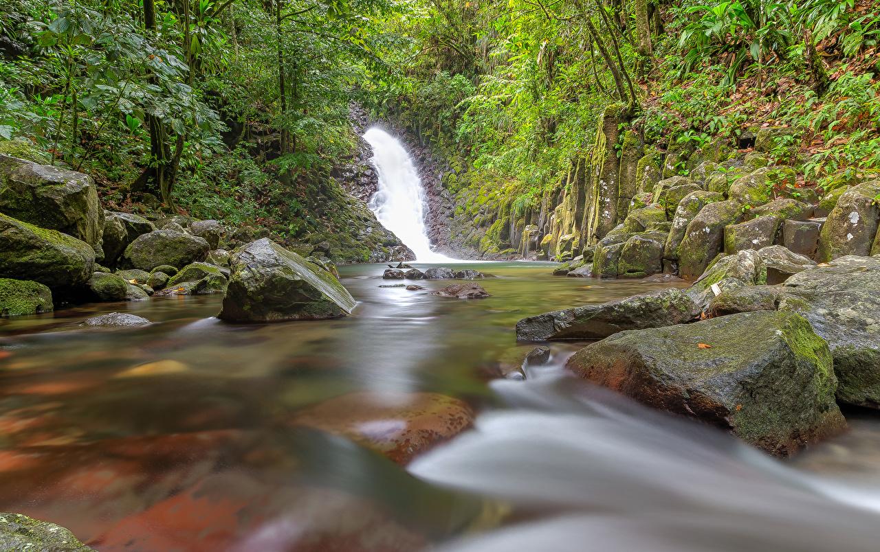 Фотографии Guadeloupe Cascade Paradis Природа Водопады Леса тропический мха Камень лес Тропики Мох мхом Камни