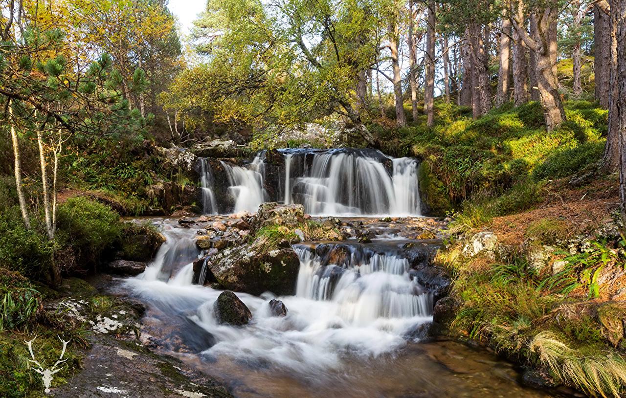 Фотография Шотландия Cairngorms Природа Водопады Парки Деревья парк дерево дерева деревьев