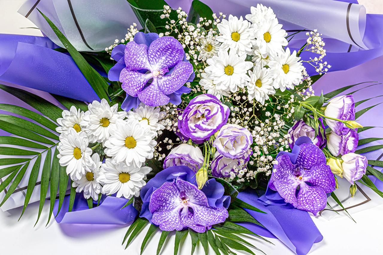 Обои для рабочего стола Букеты орхидея цветок Лизантус Хризантемы букет Орхидеи Цветы Эустома