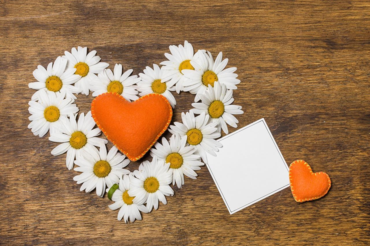 Фотографии День святого Валентина сердечко цветок ромашка Шаблон поздравительной открытки День всех влюблённых серце сердца Сердце Цветы Ромашки