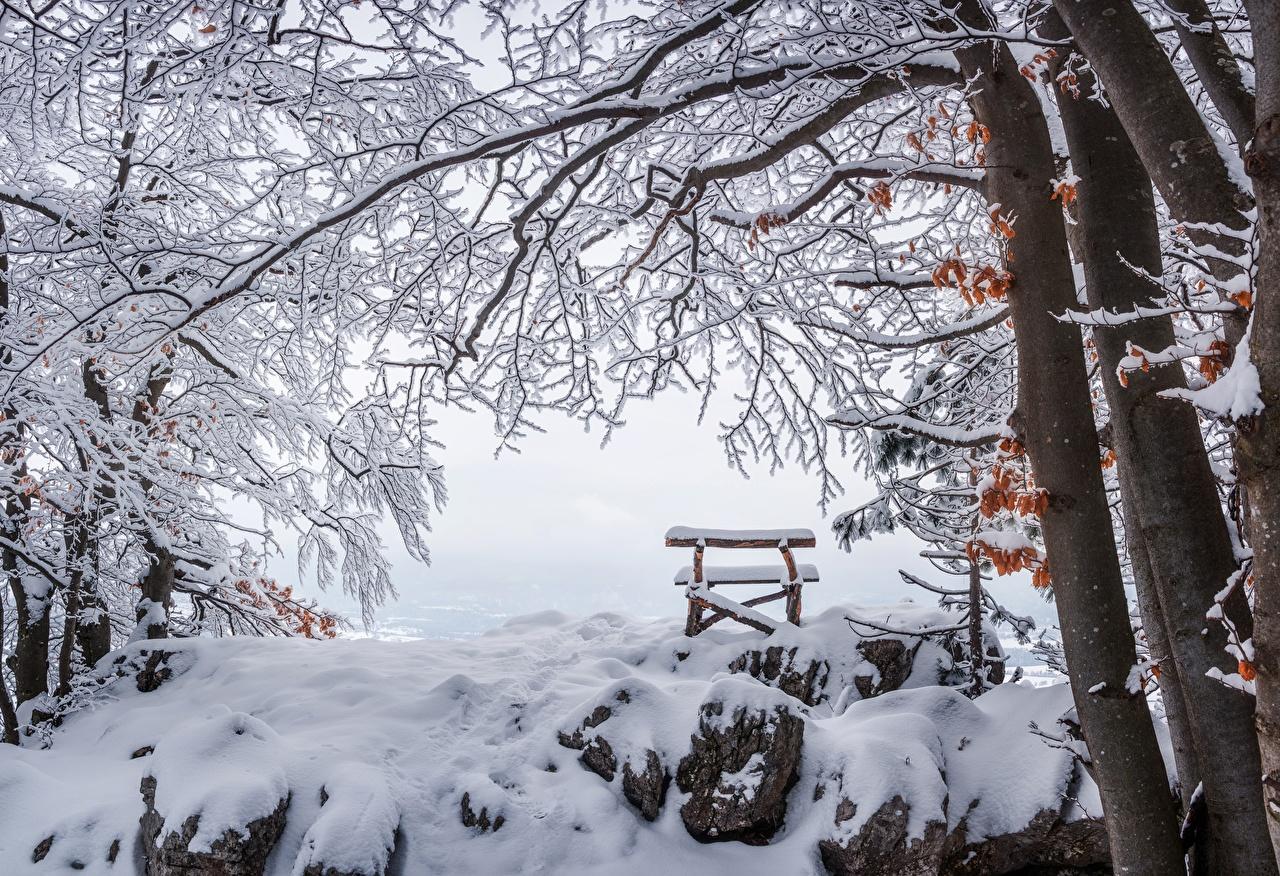 Картинка Зима Природа Снег Камни Ветки Скамейка зимние снеге снегу снега ветка ветвь Камень Скамья на ветке