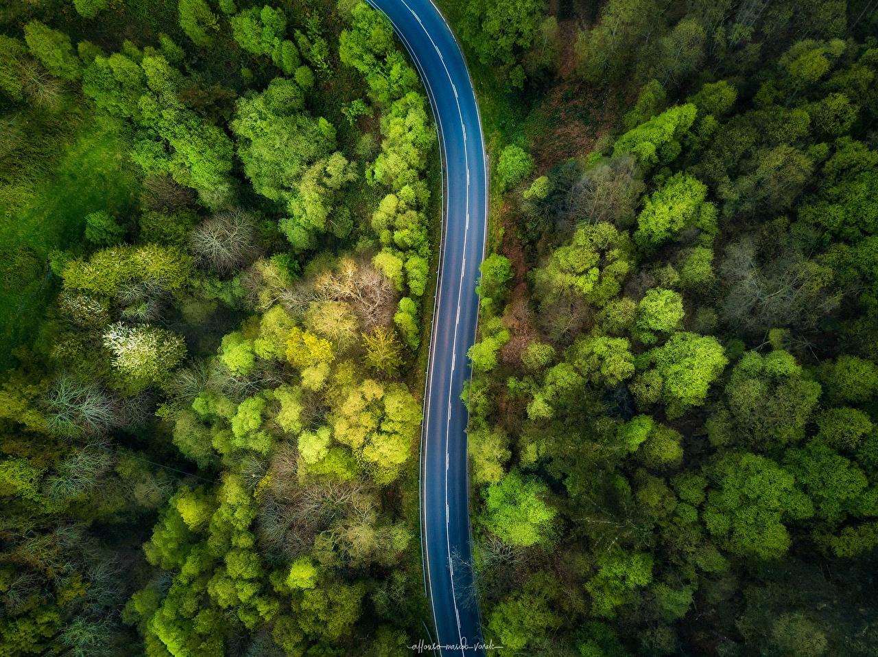 Обои для рабочего стола Природа Леса Дороги Сверху деревьев лес дерево дерева Деревья