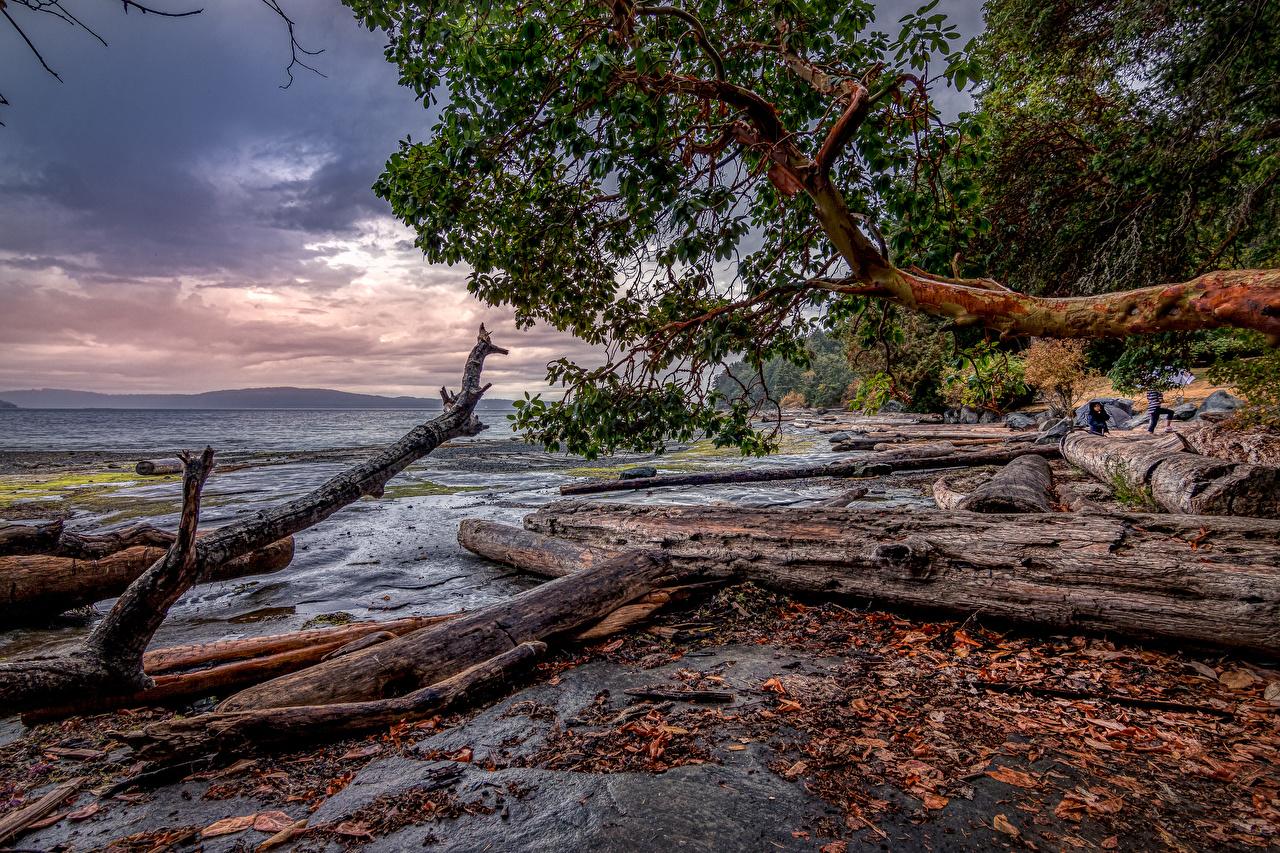 Фото Канада Nanaimo HDRI Бревна Природа ветвь Побережье HDR бревно ветка Ветки берег на ветке