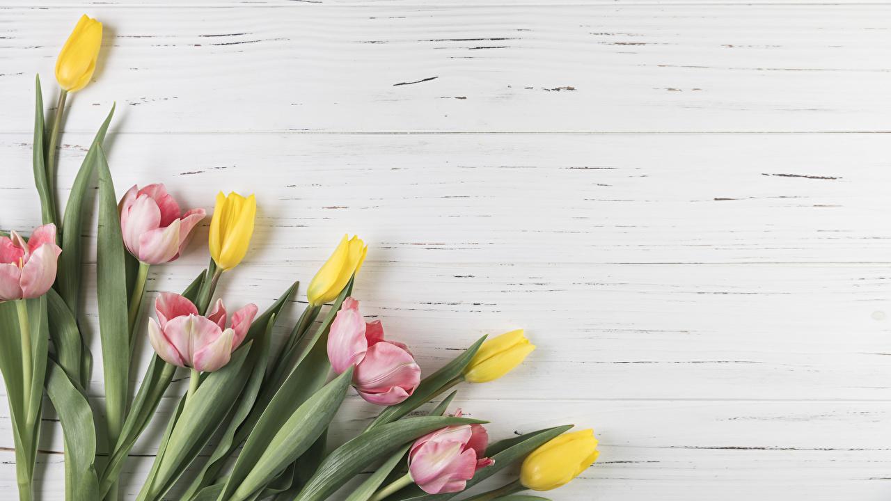Картинка Тюльпаны Цветы Шаблон поздравительной открытки Крупным планом Доски тюльпан цветок вблизи