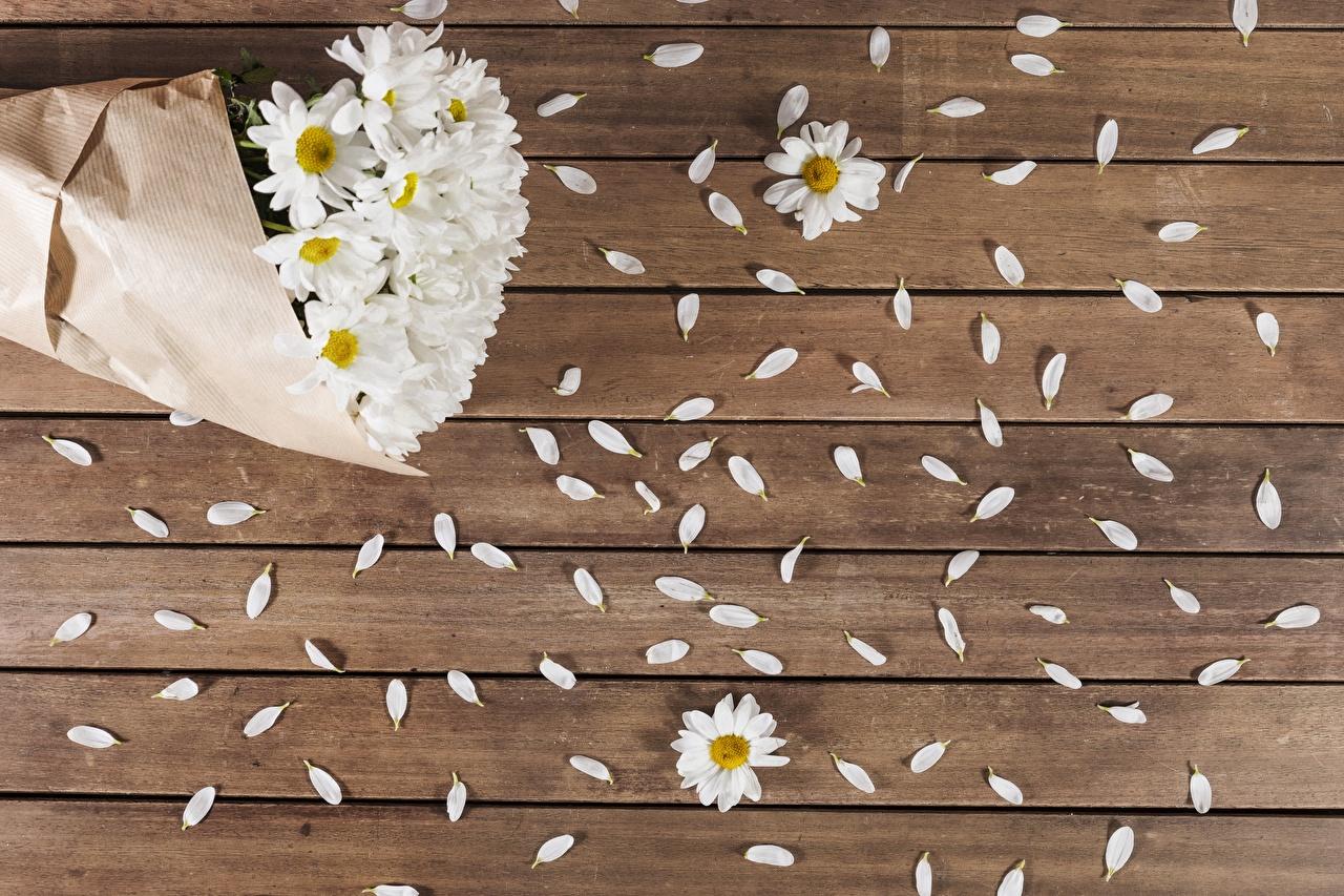 Картинки Лепестки цветок ромашка Доски лепестков Цветы Ромашки