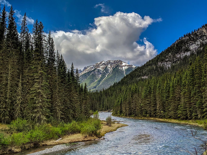 Фотографии Банф Канада Ель гора Природа парк Леса Пейзаж река ели Горы лес Парки Реки речка