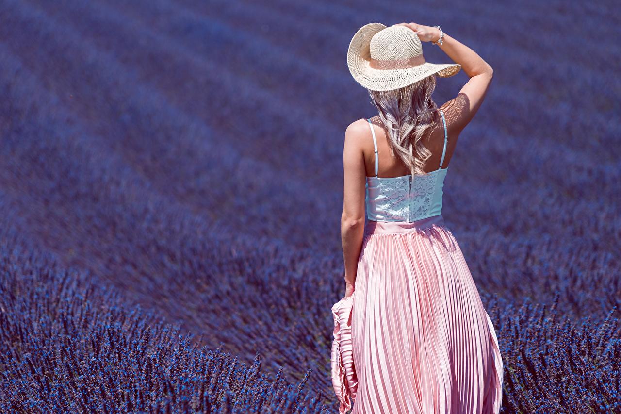 Фотографии блондинки шляпы Девушки Поля Лаванда Сзади блондинок Блондинка шляпе Шляпа девушка молодые женщины молодая женщина вид сзади