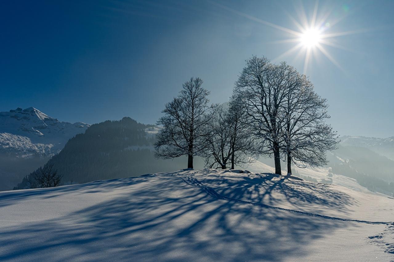 Фотографии Лучи света Тень Зима солнца Природа снеге Деревья Солнце зимние Снег снегу снега дерево дерева деревьев