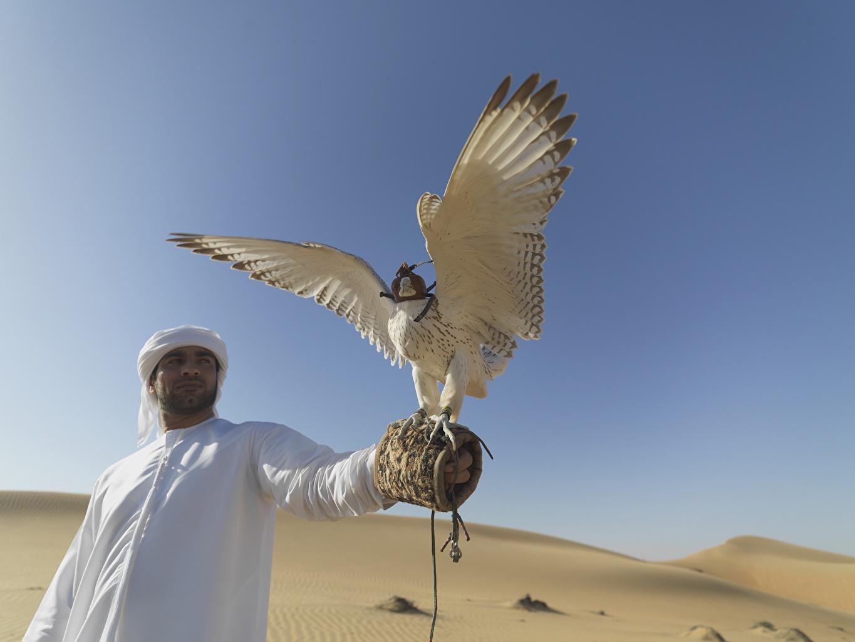 Обои для рабочего стола птица Сокол ОАЭ мужчина Пустыни Животные Птицы Объединённые Арабские Эмираты Мужчины пустыня животное