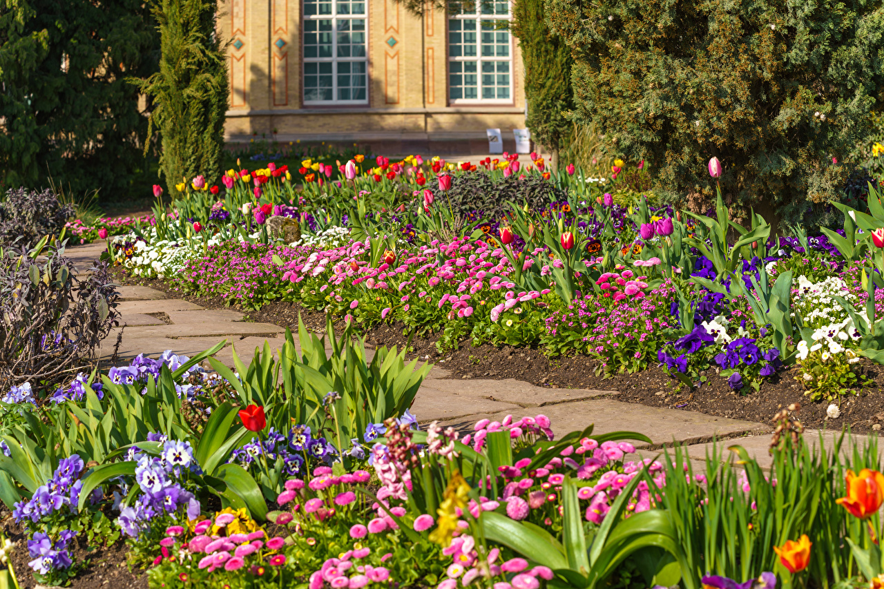 Фото Германия Karlsruhe тюльпан Природа Фиалка трёхцветная Парки Маргаритка Тюльпаны Анютины глазки парк