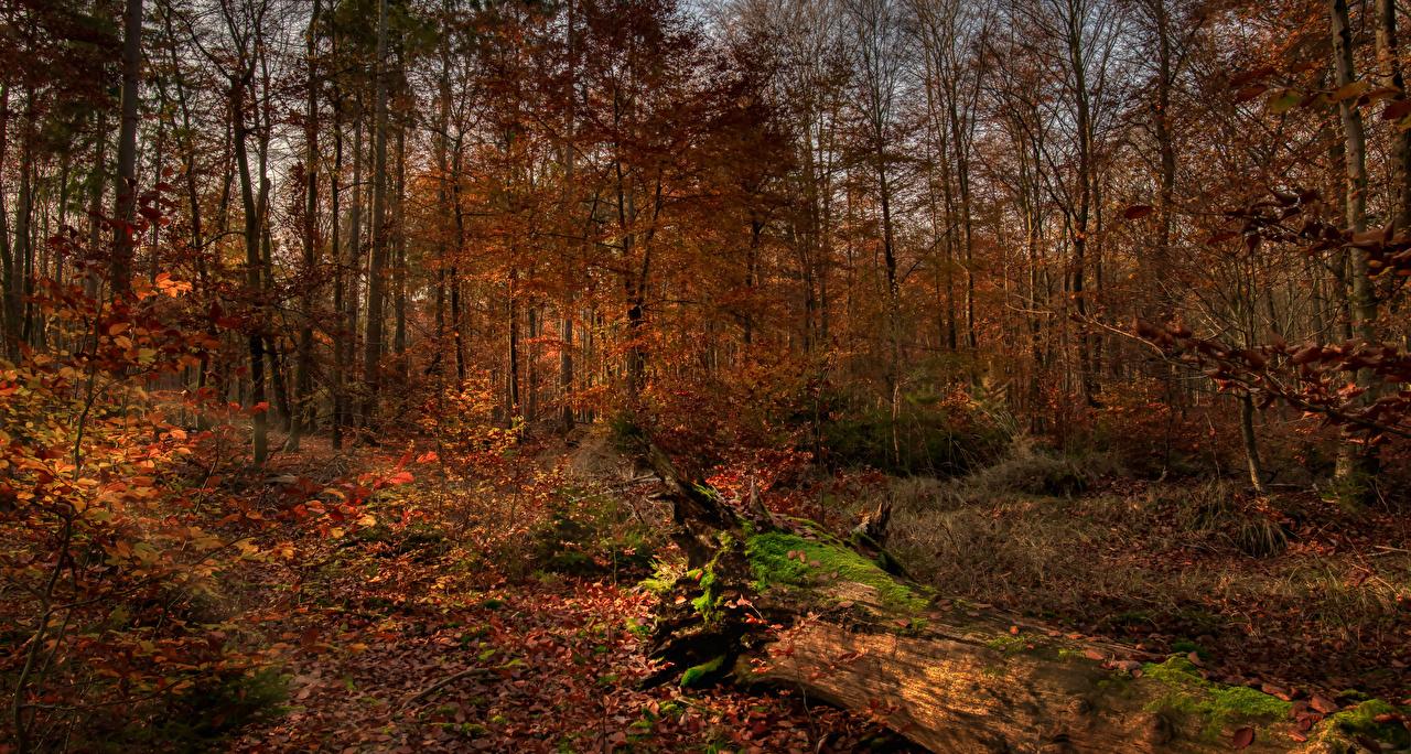 Фотографии Листва Осень Природа Леса Деревья лист Листья осенние лес дерево дерева деревьев