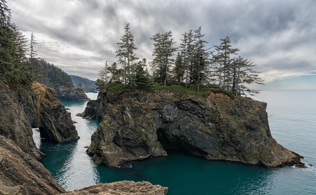 Фотография США Oregon coast sea Скала Природа Побережье деревьев штаты америка Утес скале скалы берег дерево дерева Деревья