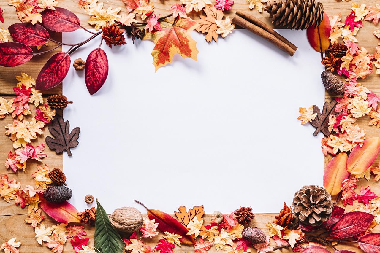 Фотография Листья Природа осенние шишка Шаблон поздравительной открытки лист Листва Осень Шишки
