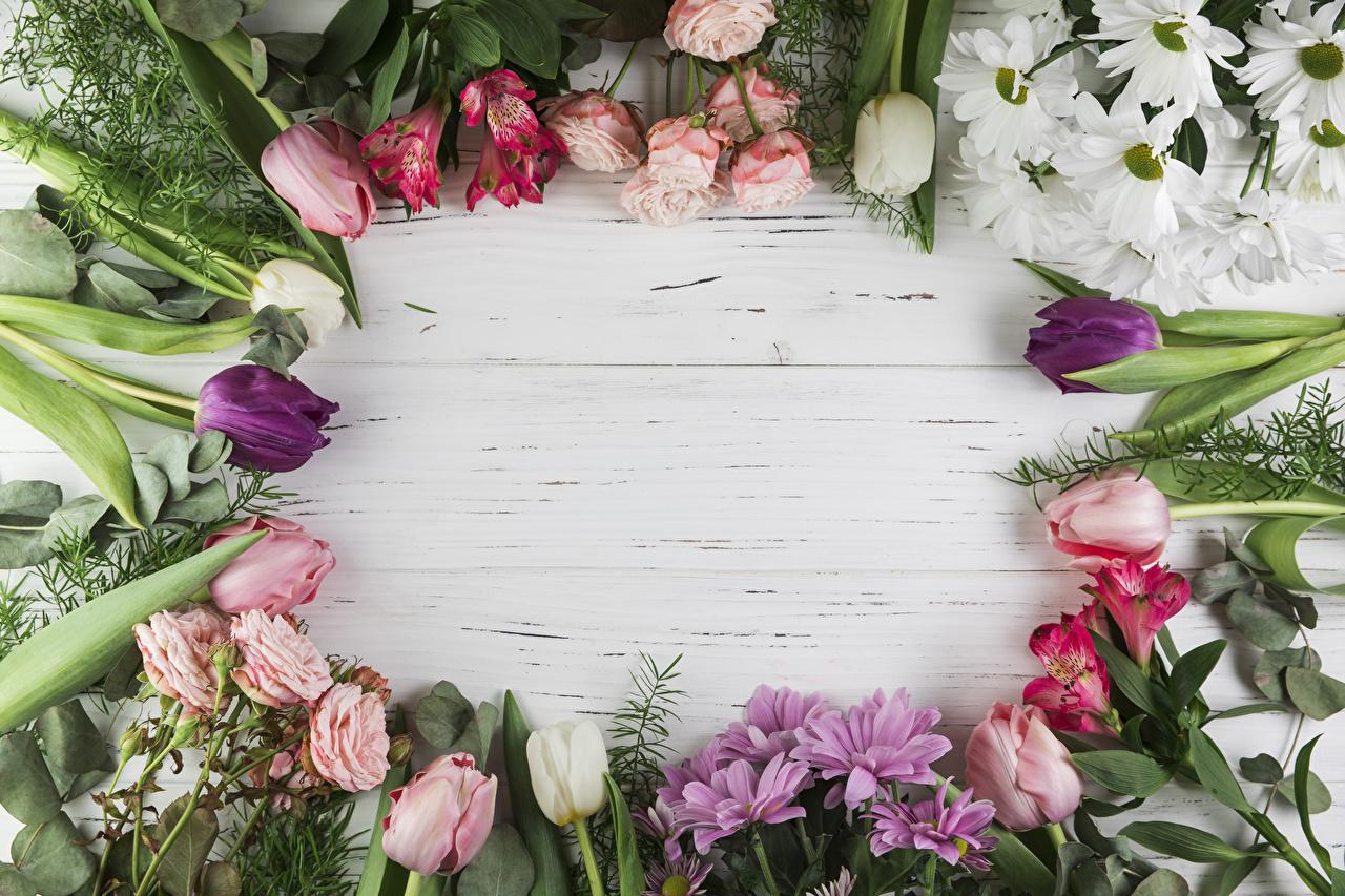Картинка роза Тюльпаны Цветы Хризантемы Альстрёмерия Шаблон поздравительной открытки Доски Розы тюльпан цветок