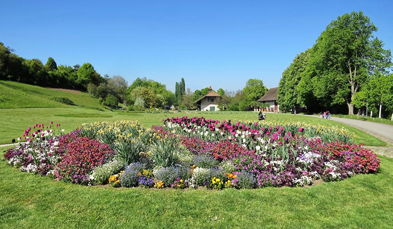 Обои для рабочего стола Швейцария Merian Garten Basel тюльпан Природа Парки Нарциссы Трава Тюльпаны парк траве