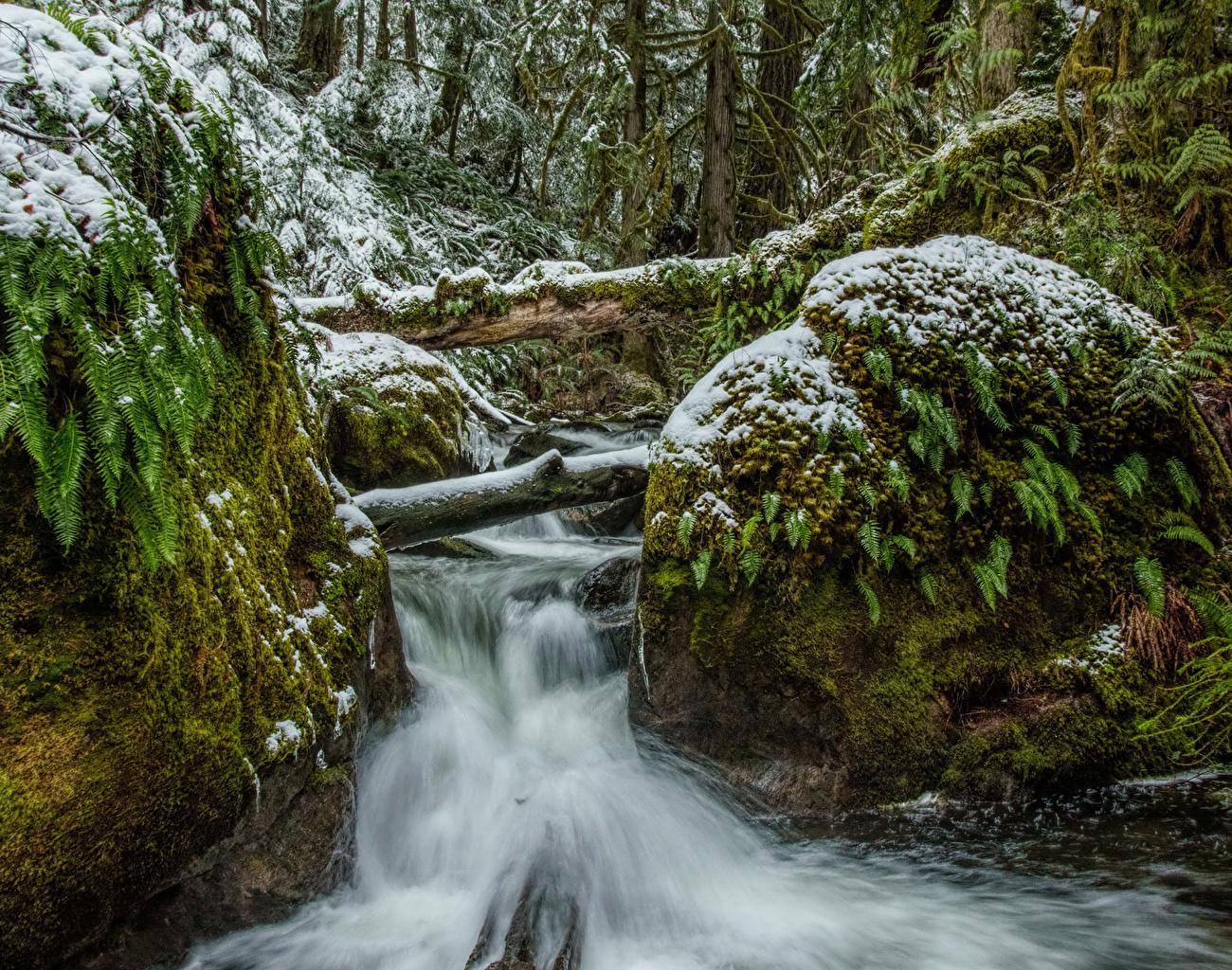 Фото Канада Vancouver Island Parks Ручей Природа Водопады Снег Парки Мох