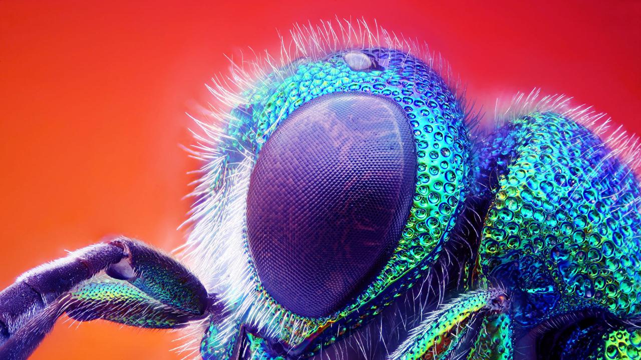 Фотография Мухи Насекомые Глаза животное Крупным планом насекомое вблизи Животные