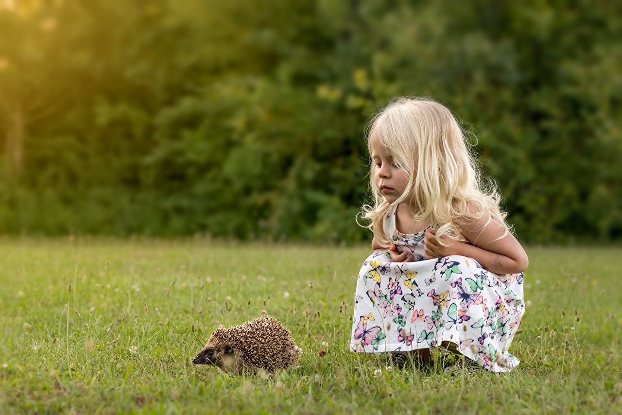 Фотографии Девочки Ежи Ребёнок Трава Животные девочка Ежики Дети траве