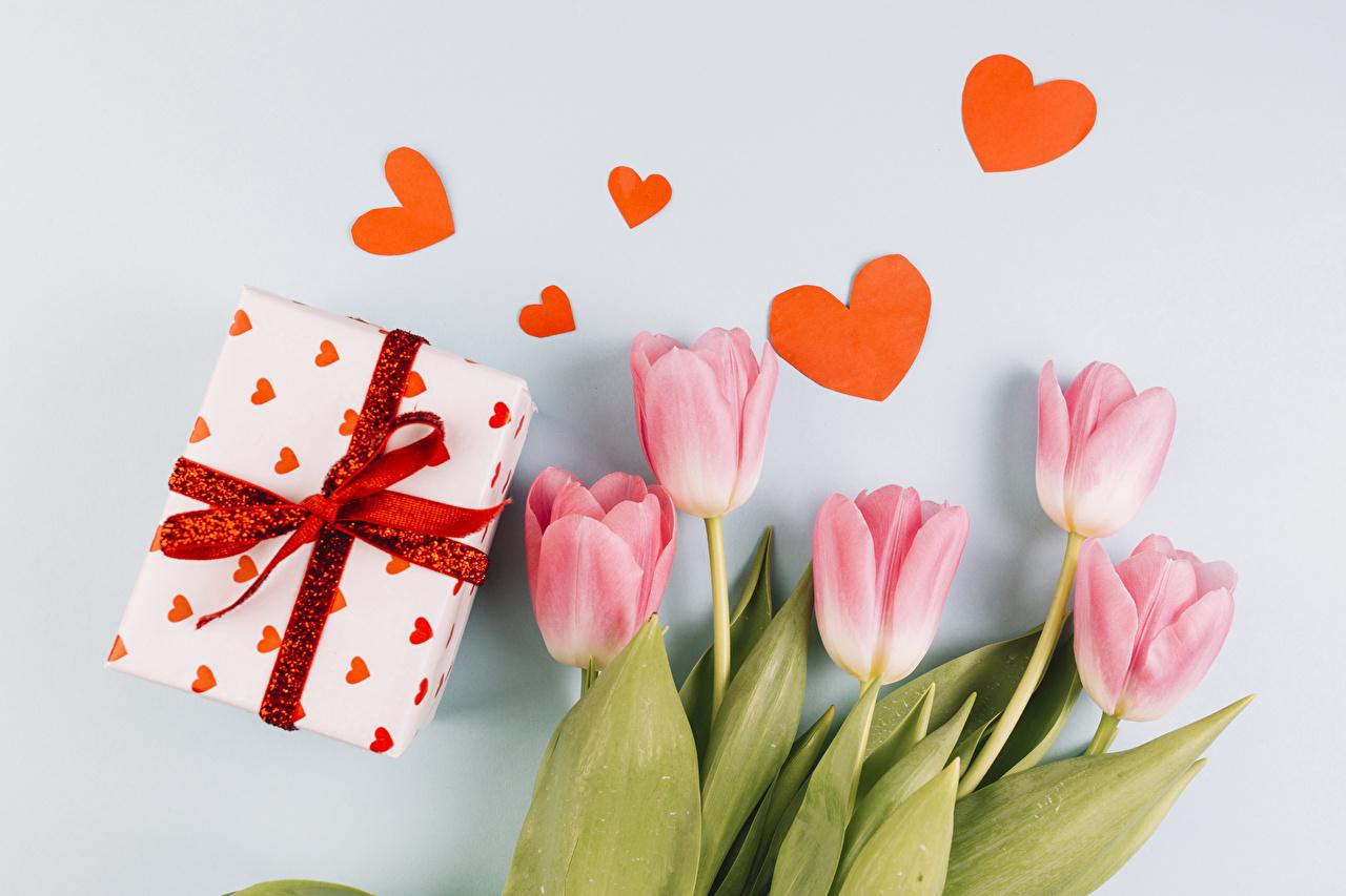 Фотография День святого Валентина Сердце Розовый Тюльпаны Цветы Подарки Серый фон День всех влюблённых сердечко