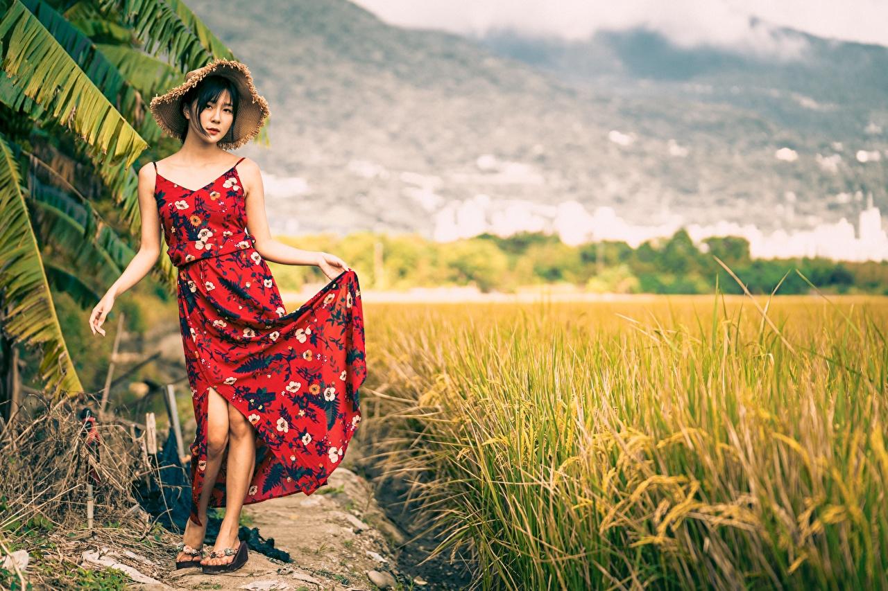 Картинка Брюнетка позирует Шляпа молодые женщины Поля азиатки Платье брюнеток брюнетки Поза шляпы шляпе Девушки девушка молодая женщина Азиаты азиатка платья