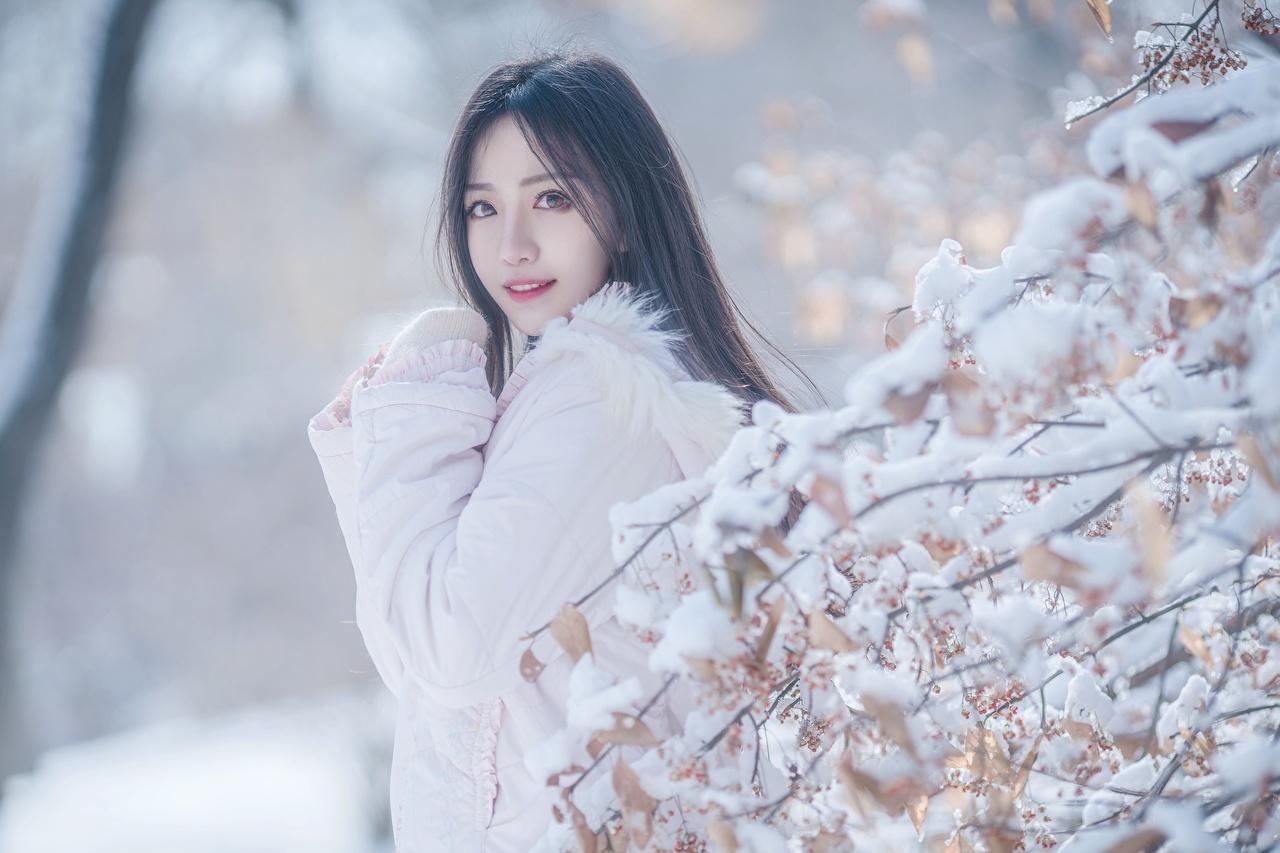Фотография Брюнетка боке Зима Девушки снегу Азиаты Ветки смотрят брюнетки брюнеток Размытый фон зимние девушка молодая женщина молодые женщины Снег снега снеге азиатки азиатка ветвь ветка на ветке Взгляд смотрит