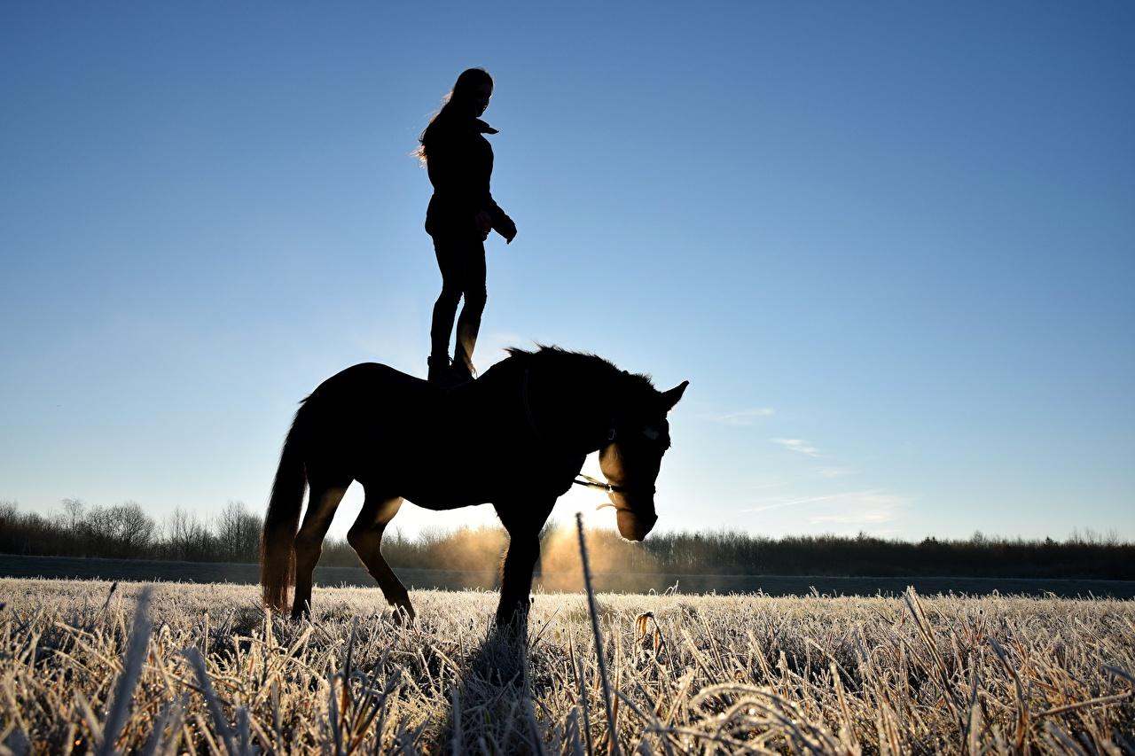 Фотография Лошади Силуэт Иней Поля Рассветы и закаты Трава Животные лошадь силуэта силуэты рассвет и закат траве животное