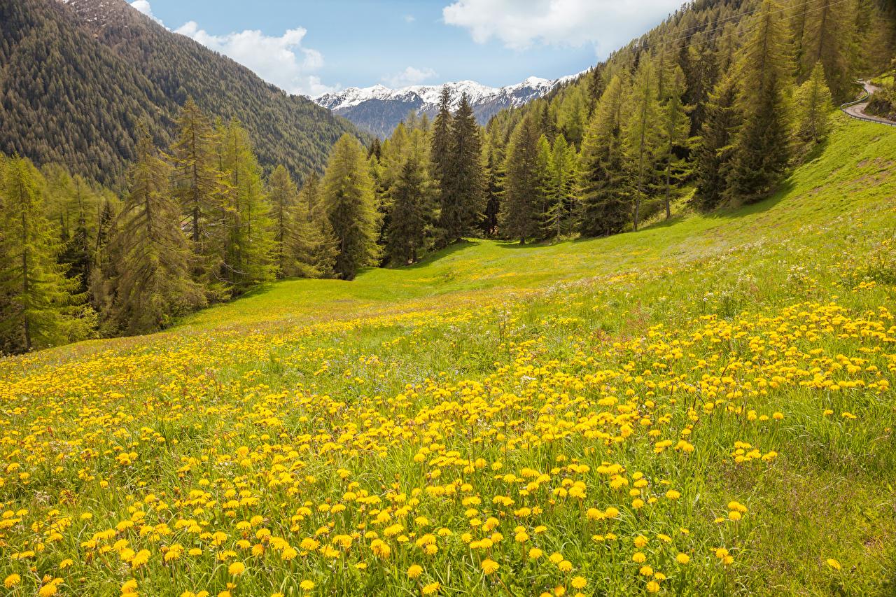 Фотография Италия Tirol гора Природа лес Луга Одуванчики Горы Леса
